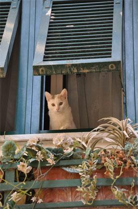 Italie chroniqueschats d 39 italie - Bruit qui attire les chats ...